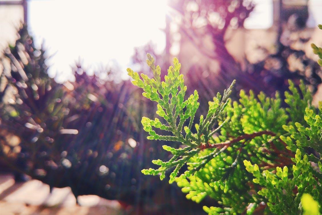 природа, солнечный свет