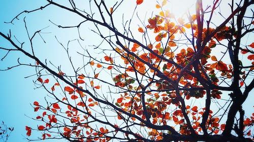 Ảnh lưu trữ miễn phí về ánh sáng mặt trời, bầu trời, cây, lá