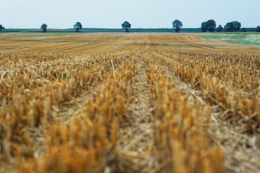 Free stock photo of field, agriculture, harvest, grain