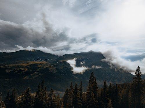 Kostenloses Stock Foto zu baum, berg, berge