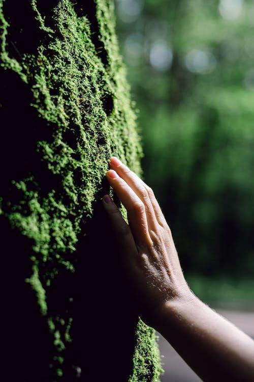 Δωρεάν στοκ φωτογραφιών με βρύο, δασικός, δάσος