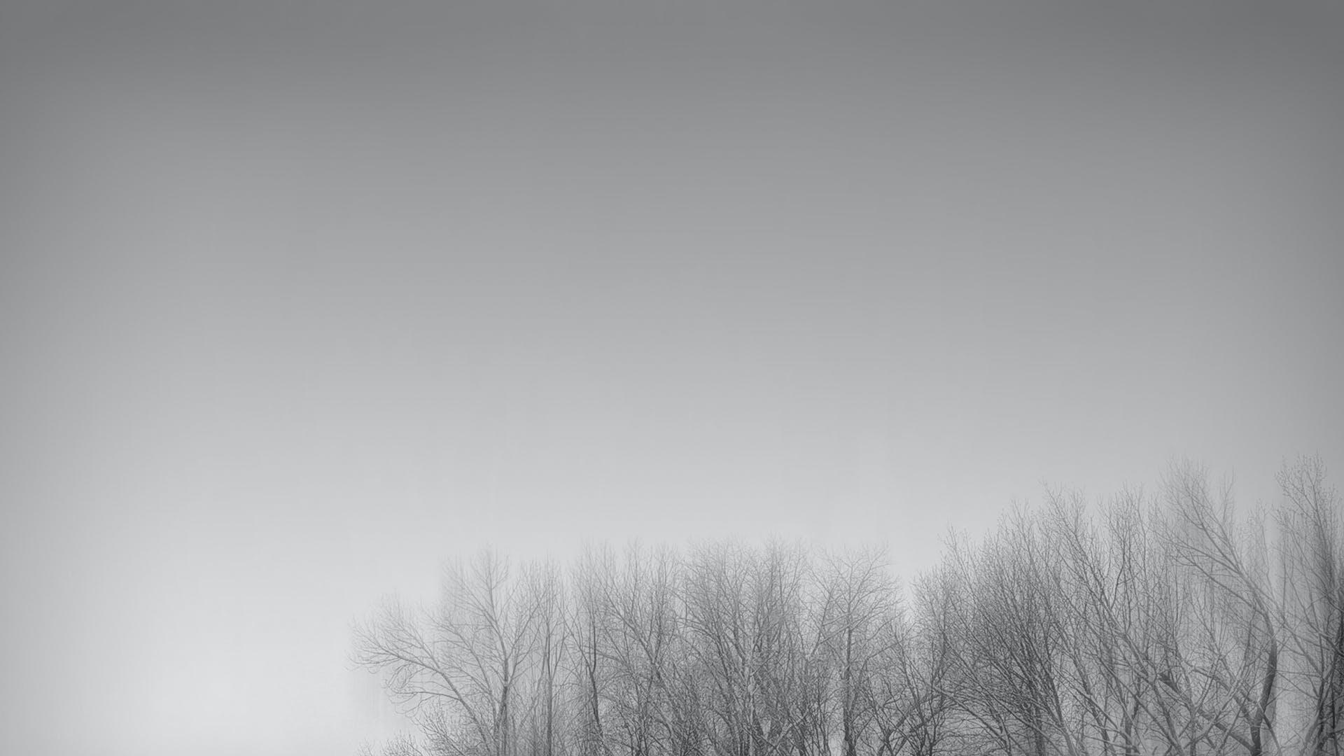 Free stock photo of black and white, minimal, minimalism, trees