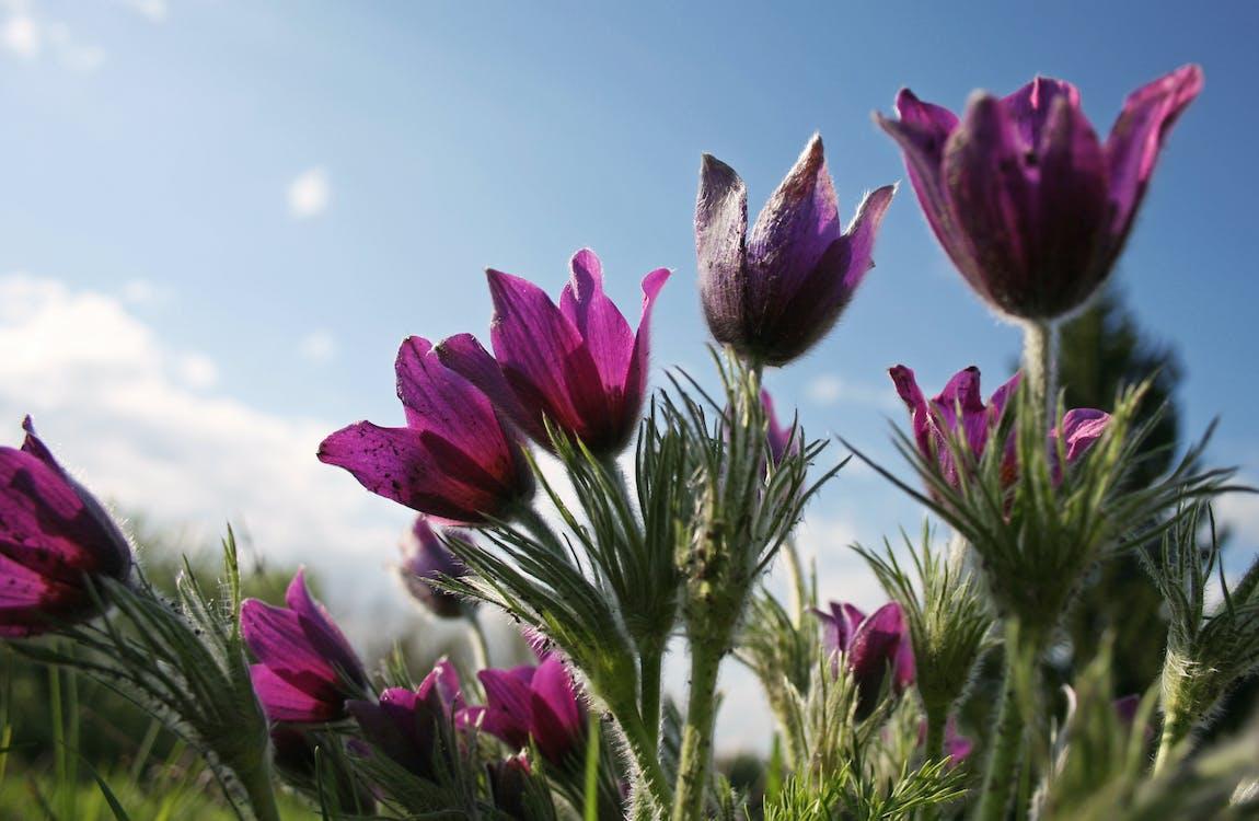 centrale, fleur, fleurir