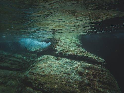 Gratis lagerfoto af dykke, dykning, fisk