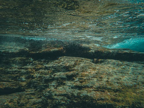 Gratis lagerfoto af bølge, farve, fisk