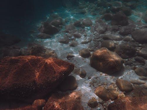 Gratis lagerfoto af dyb, dyreliv, ferie