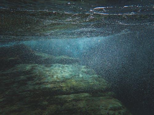 Gratis lagerfoto af fisk, flod, hav