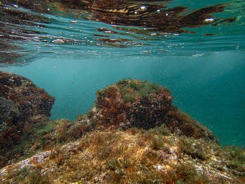 Gratis lagerfoto af dykke, dykning, farve
