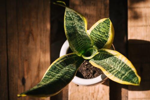Gratis stockfoto met achtergrond, blad, bloem