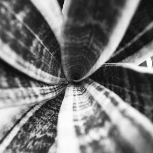 Gratis stockfoto met abstract, abstracte vormen, beest