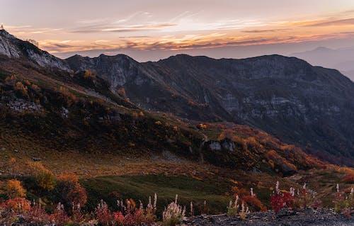 Free stock photo of dawn, evening, fall