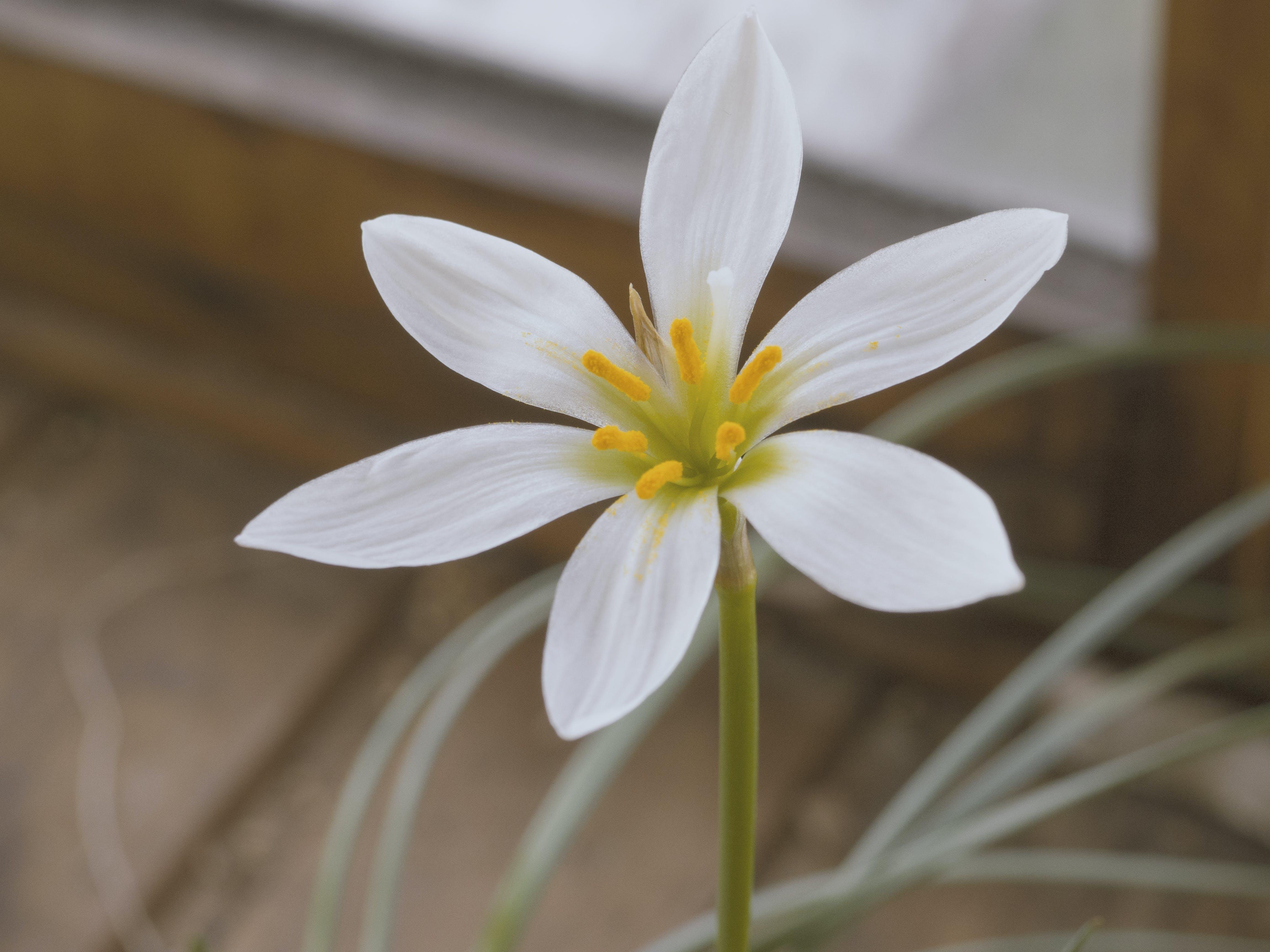 Selective Focus Photo of White Rain Lily