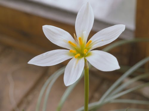 Selective Focus Photo of White Rain Lily