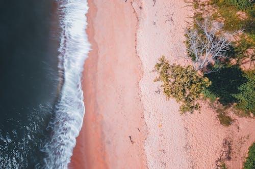 Ảnh lưu trữ miễn phí về bờ biển, cát, cây