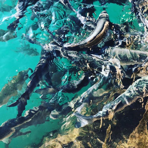Imagine de stoc gratuită din pește aqua animale de apă port spania