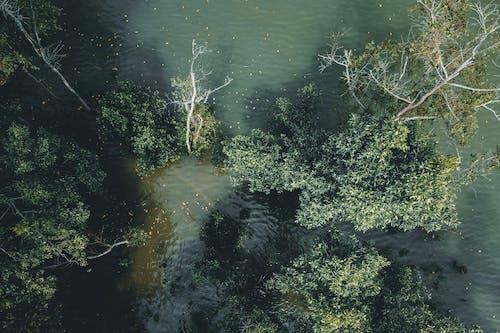 Ảnh lưu trữ miễn phí về ánh sáng, cây, con sông
