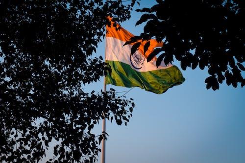 Immagine gratuita di alberi, bandiera indiana, bandiera nazionale, cielo azzurro
