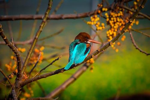 Immagine gratuita di albero, animale, india, luce del sole
