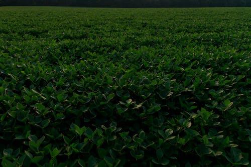 Ingyenes stockfotó aratás, farm, földművelés témában