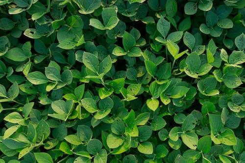 Ingyenes stockfotó aratás, földművelés, gazdálkodás témában