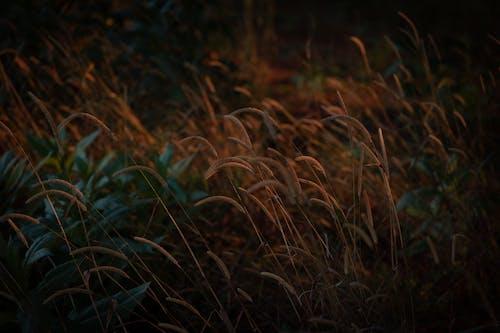 Ingyenes stockfotó fű, gaz, gyom témában
