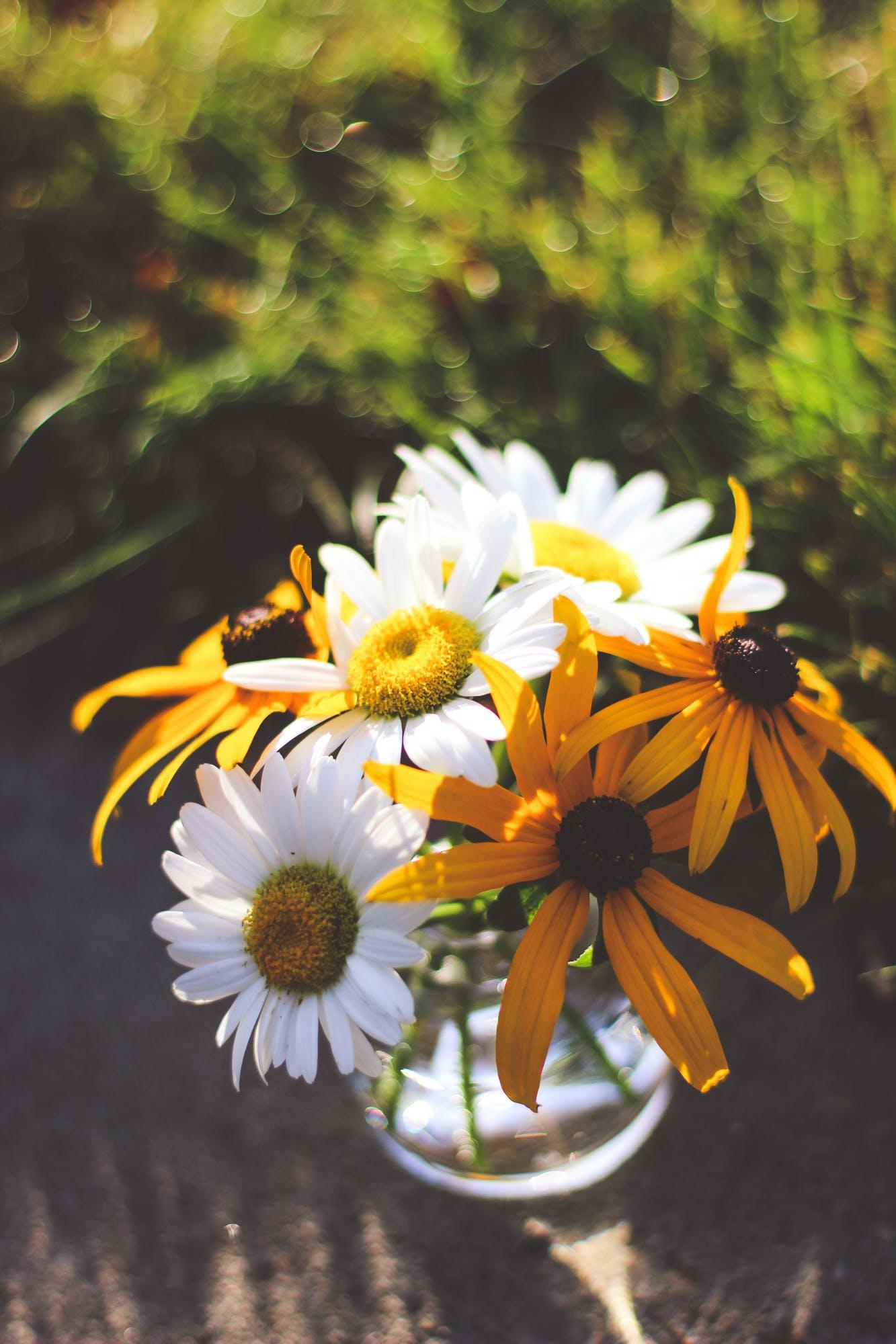 Free stock photo of bouquet, flowers, plants, vase