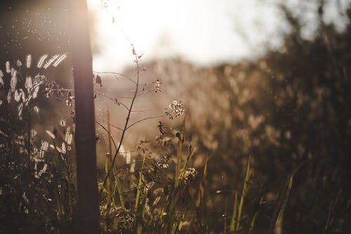 Imagine de stoc gratuită din backlit, centrale, iarbă, plantă