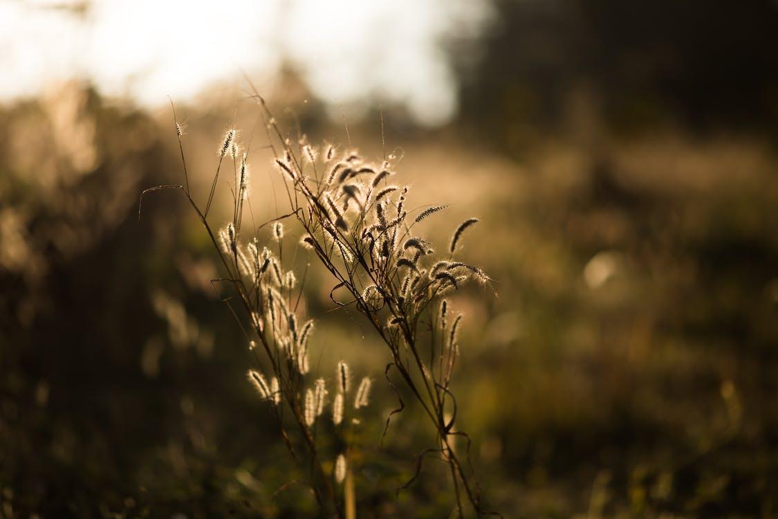 fält, gräs, makro