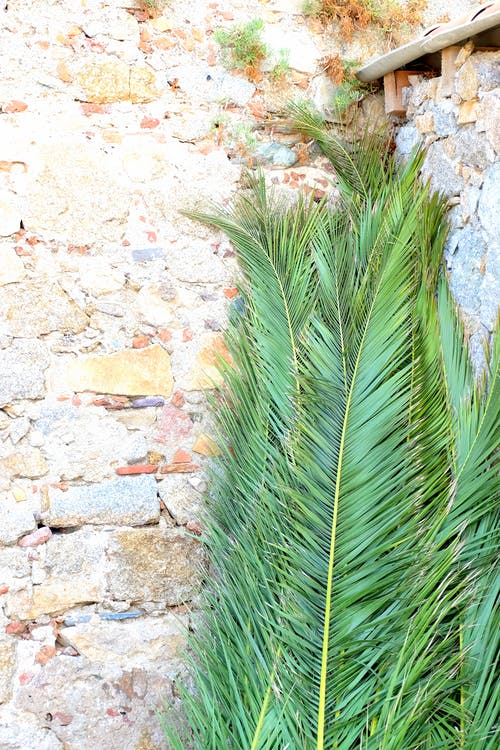 Palm Leaves Leaning on Brickwalls