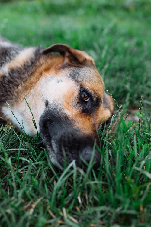 Fotos de stock gratuitas de adorable, al aire libre, animal
