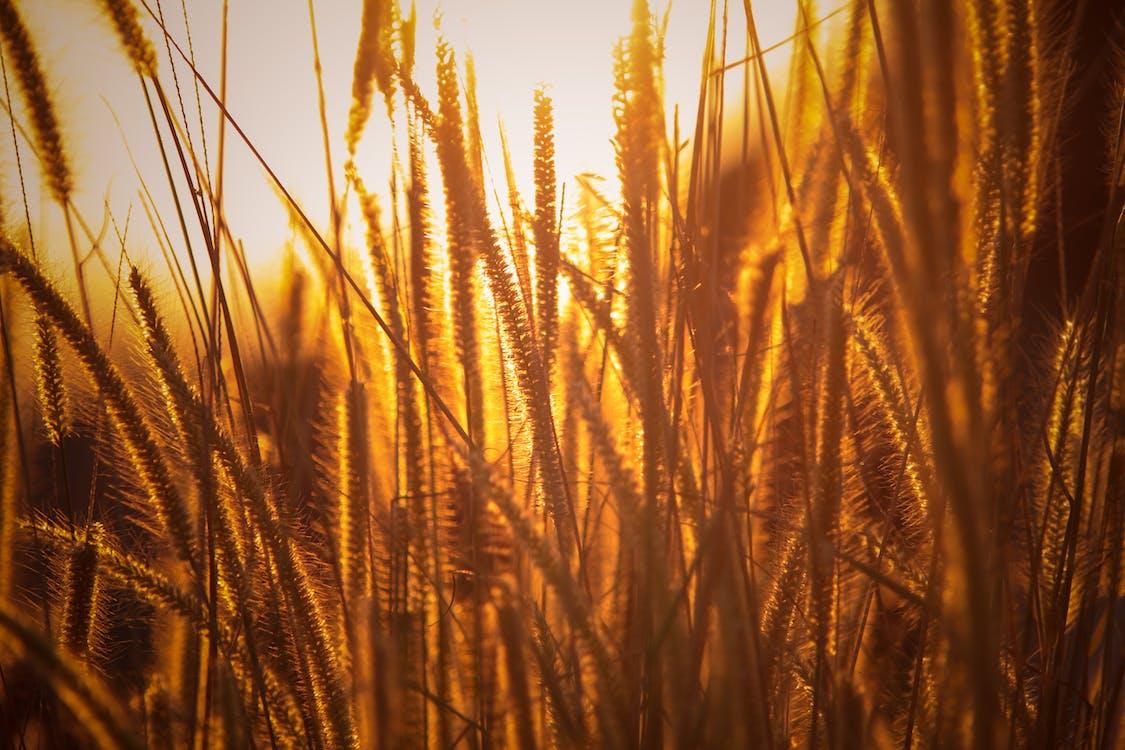 alan, altın saat, bitkiler