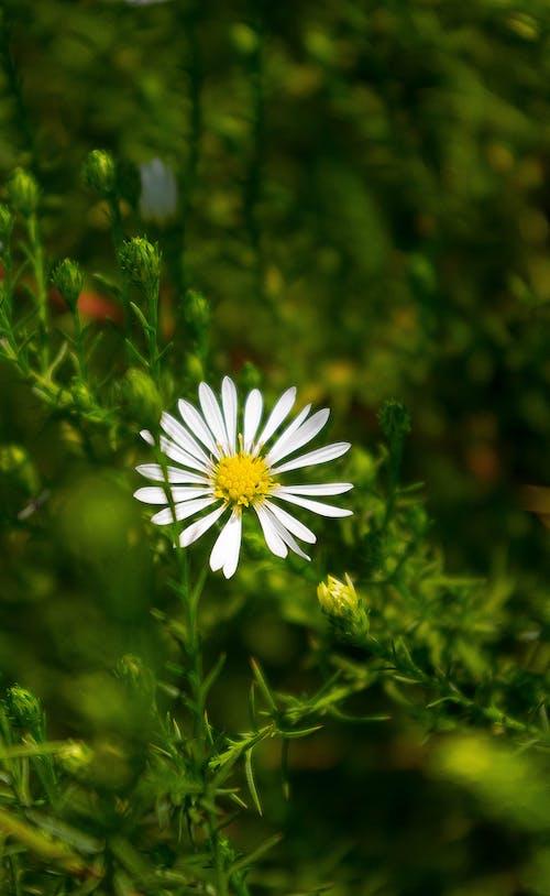 一束花, 人造花, 宏观微观, 綠色 的 免费素材照片