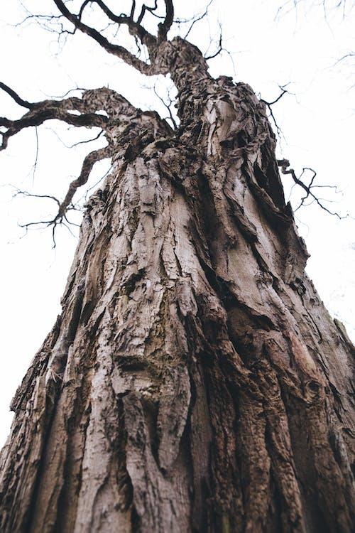 Free stock photo of dead tree, tree bark, wood