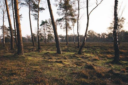 Gratis stockfoto met bomen, Bos, bossen, dageraad