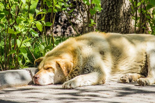Free stock photo of dog, sleep, sleeping, sunny