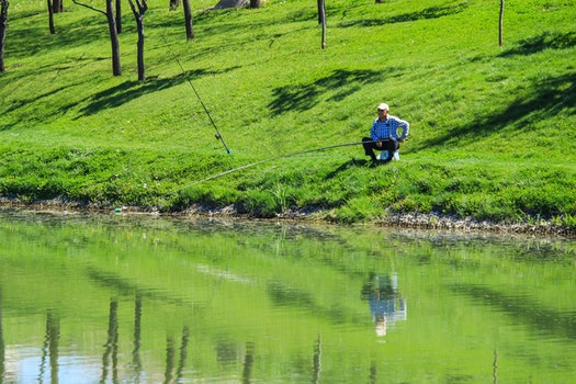 Free stock photo of summer, grass, lake, fish