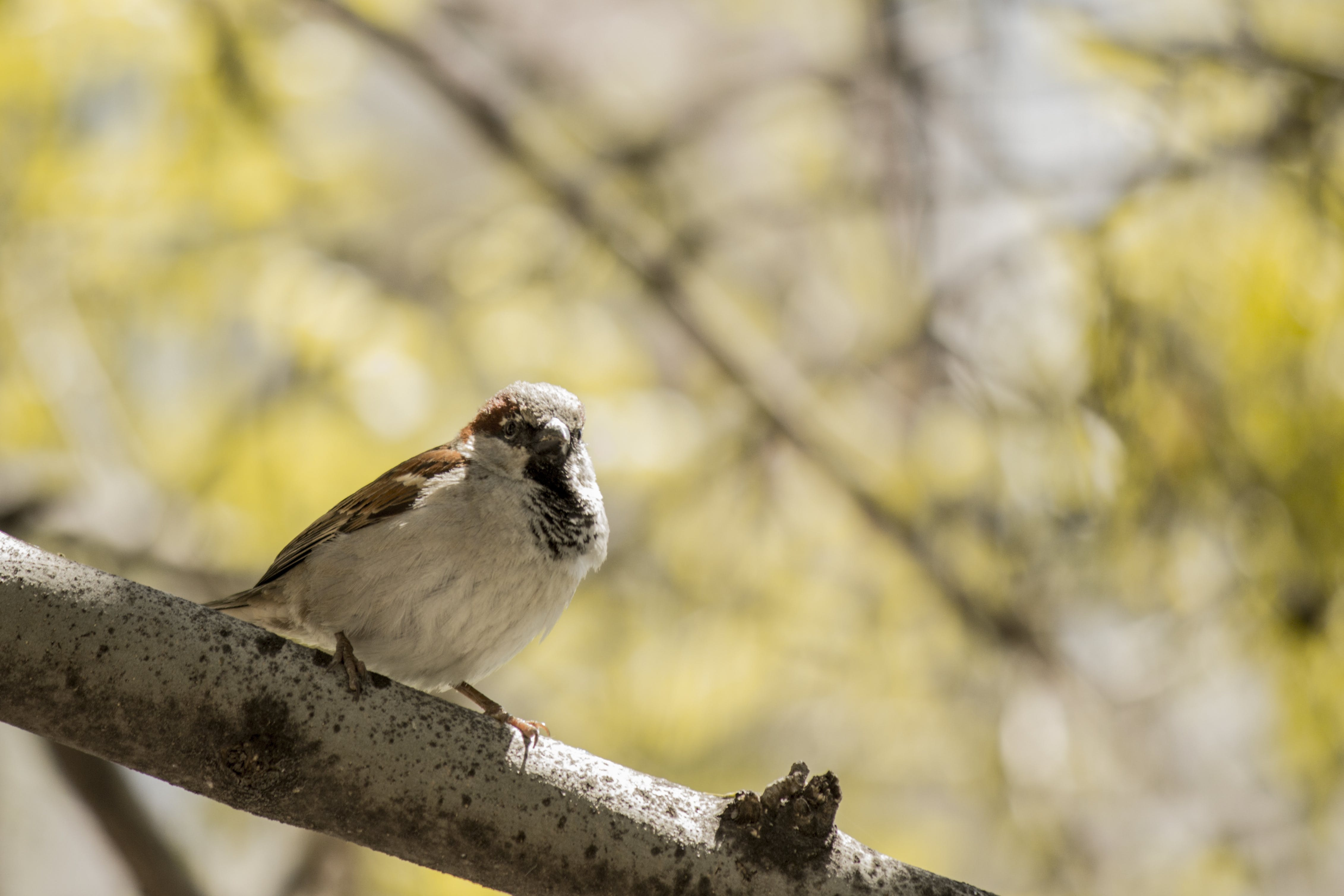 Brown and White Bird