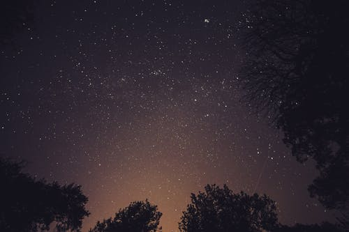 Worm's Eye View Photography of Stars over Trees during Nighttime