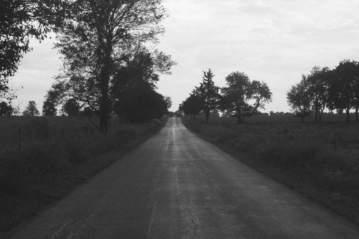 Free stock photo of road, trees, black and white