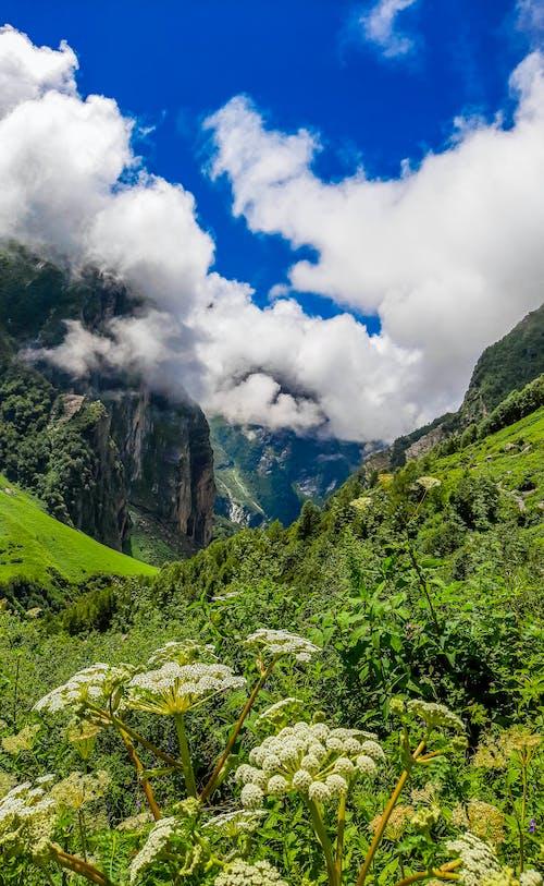 Kostenloses Stock Foto zu berg, bergblume, berge