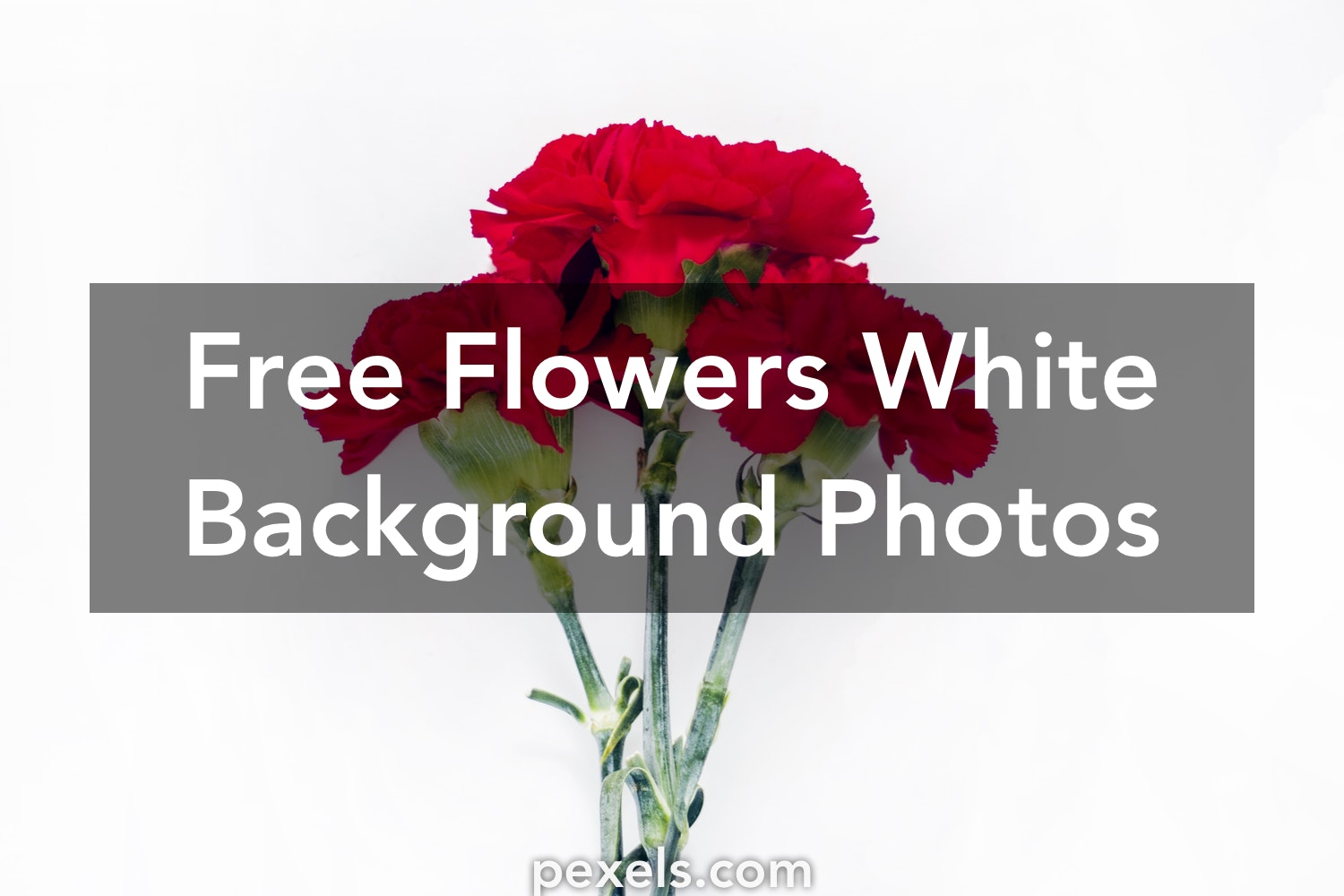 1000 Engaging Flowers White Background Photos Pexels Free Stock