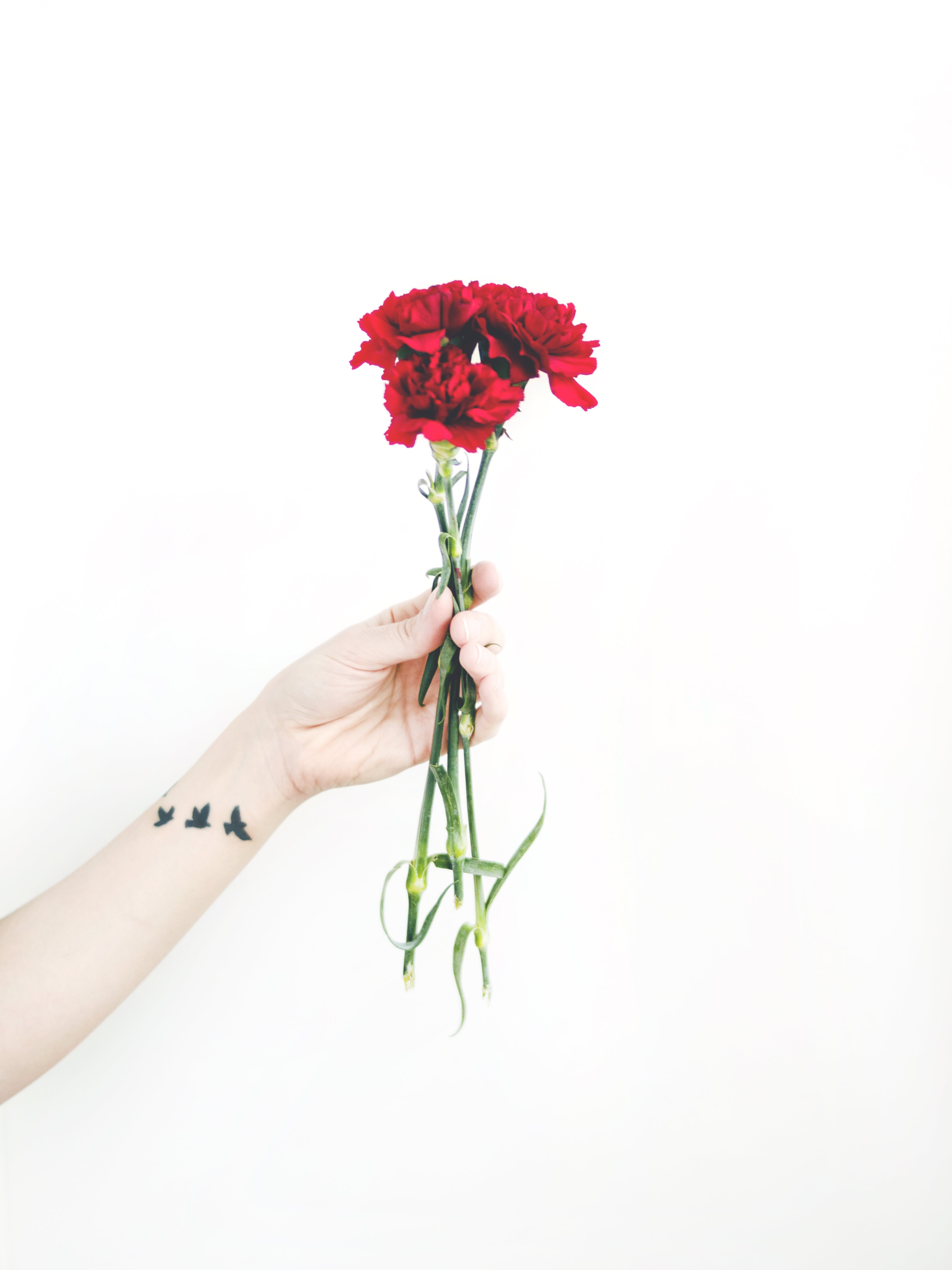 Photo of Person Holding Bouquet of Red Carnations