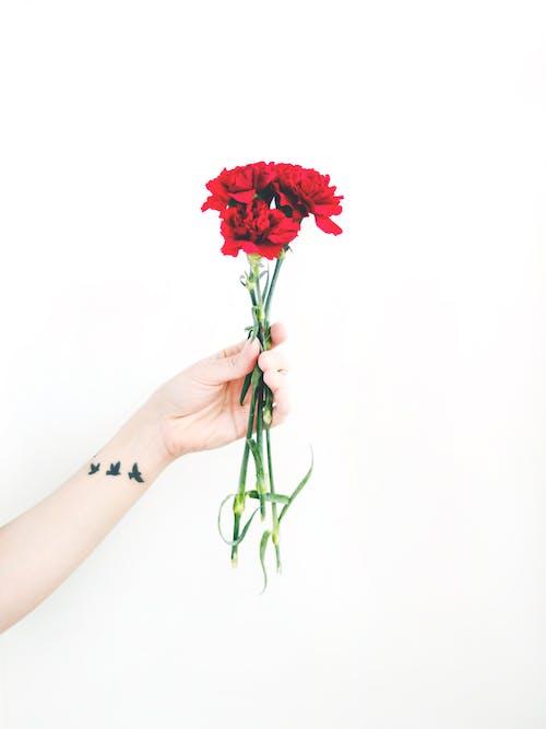 คลังภาพถ่ายฟรี ของ กลีบดอก, กำลังบาน, ช่อดอกไม้, ดอกไม้