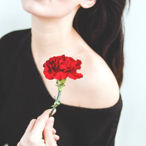 Photo Of A Woman Holding Red Carnation Flower Free Stock Photo