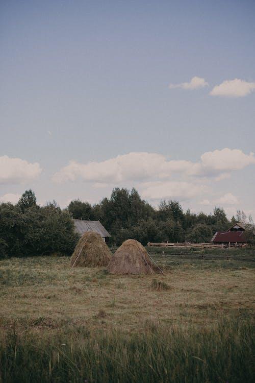 Безкоштовне стокове фото на тему «дерево, дім, краєвид»