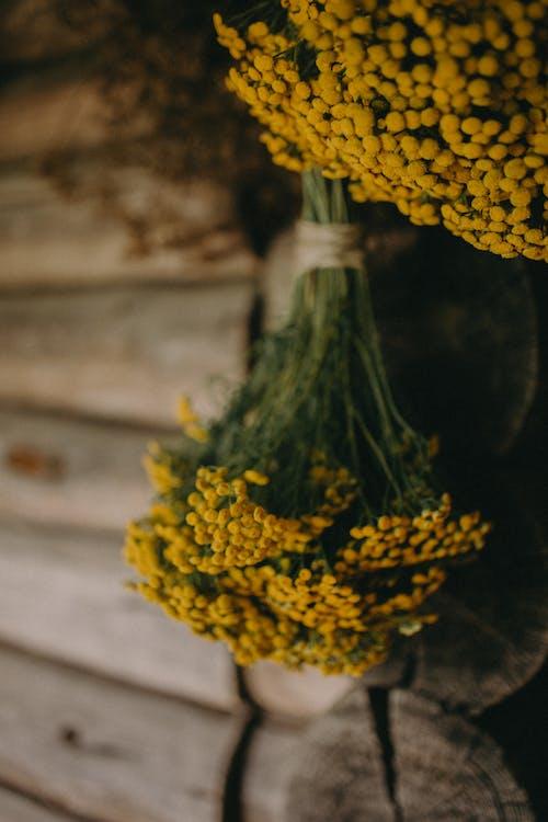 Безкоштовне стокове фото на тему «Бджола, вирощувати, Деревина»
