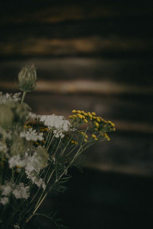 Безкоштовне стокове фото на тему «Денне світло, квіти, квітка»