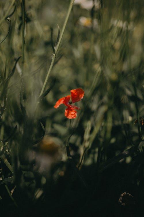 Безкоштовне стокове фото на тему «глибина різкості, квітка, колір»