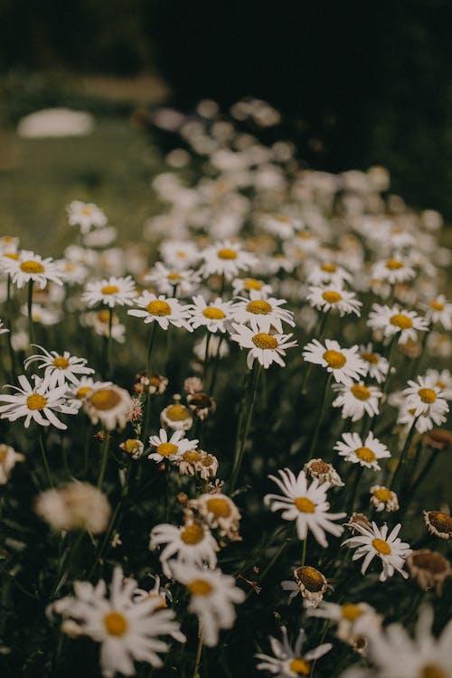 Безкоштовне стокове фото на тему «дикий, зростання, квітка»
