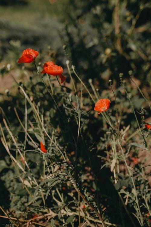 Безкоштовне стокове фото на тему «дика квітка, дикий, квітка»